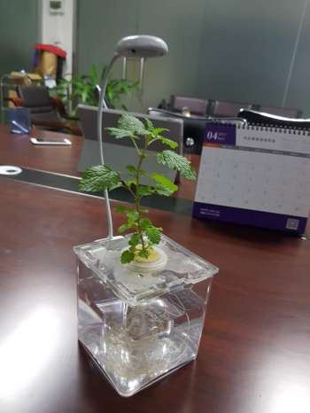 Hydroponic planter with light